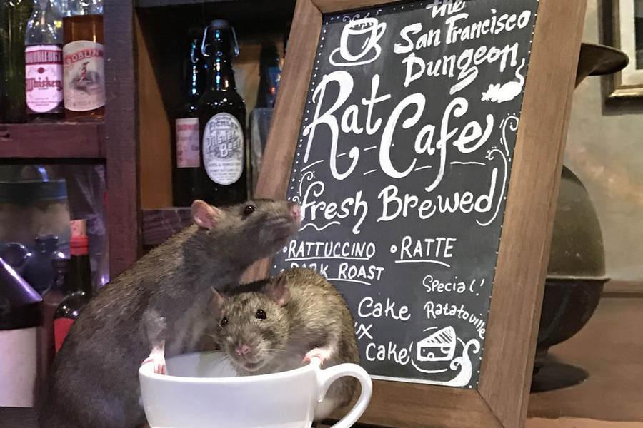 Крысиное кафе The Black Rat Cafe