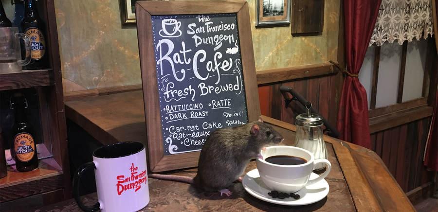 Крысы в The Black Rat Cafe