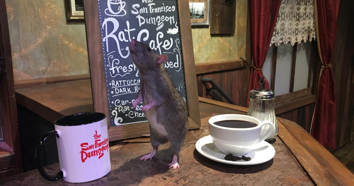 Симпатичный крыс