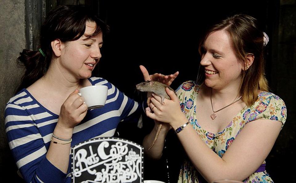 Посетительницы крысиного кафе