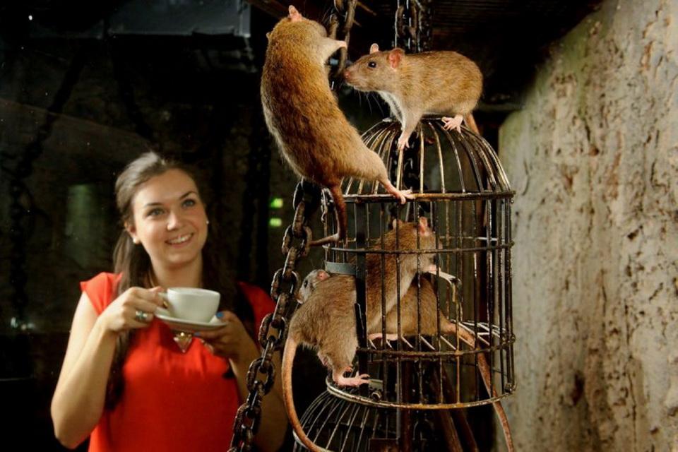 Посетительница крысиного кафе