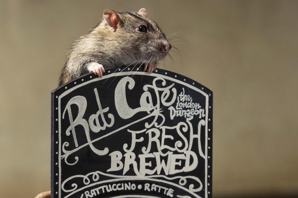 Крысиное кафе The Black Rat Cafe в Сан-Франциско
