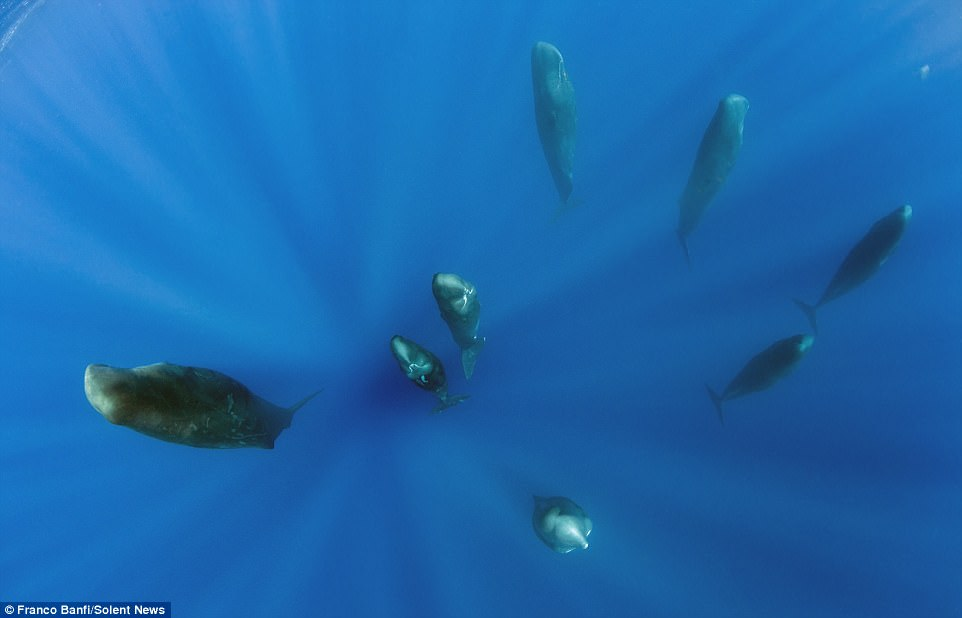 Группа Спящих китов