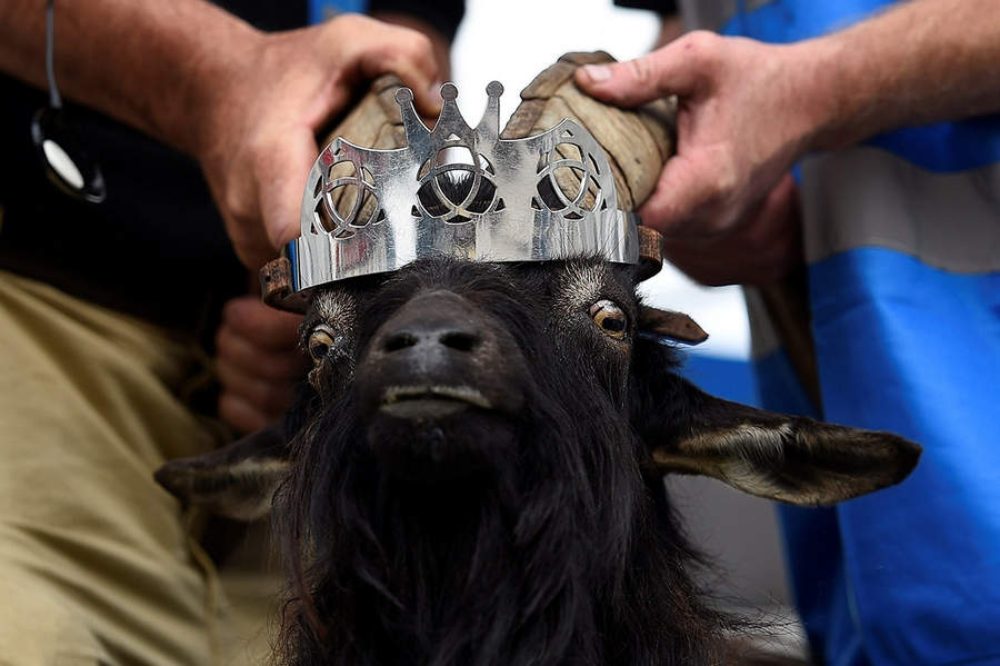Коронация Козла-Короля