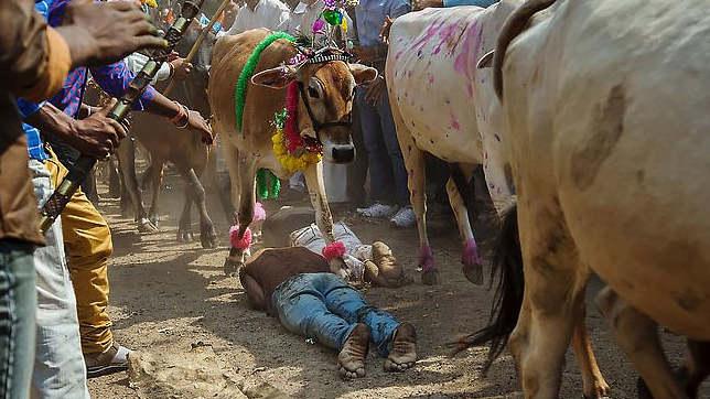 Когда коровы топчут людей - Праздник Экадаши в Индии