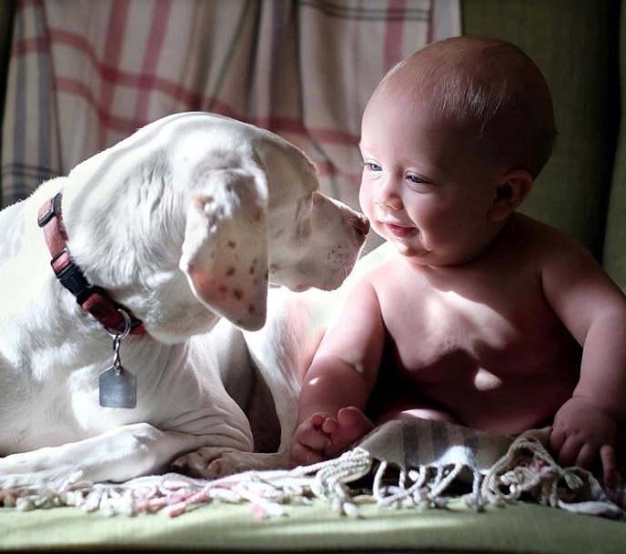 Трогательная дружба собаки Норы и ребенка Арчи