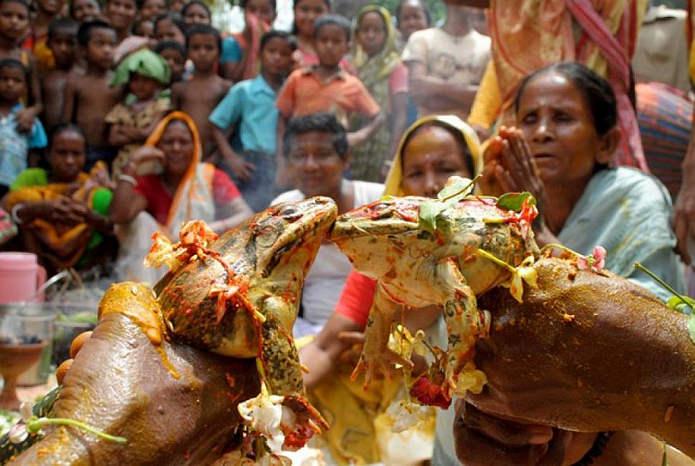Свадьба Лягушек: ритуал в Индии