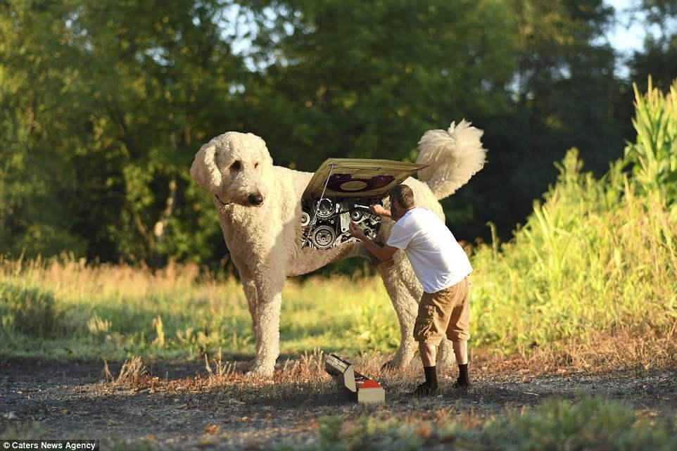 Кристофер Клайн и его собака Джуджи