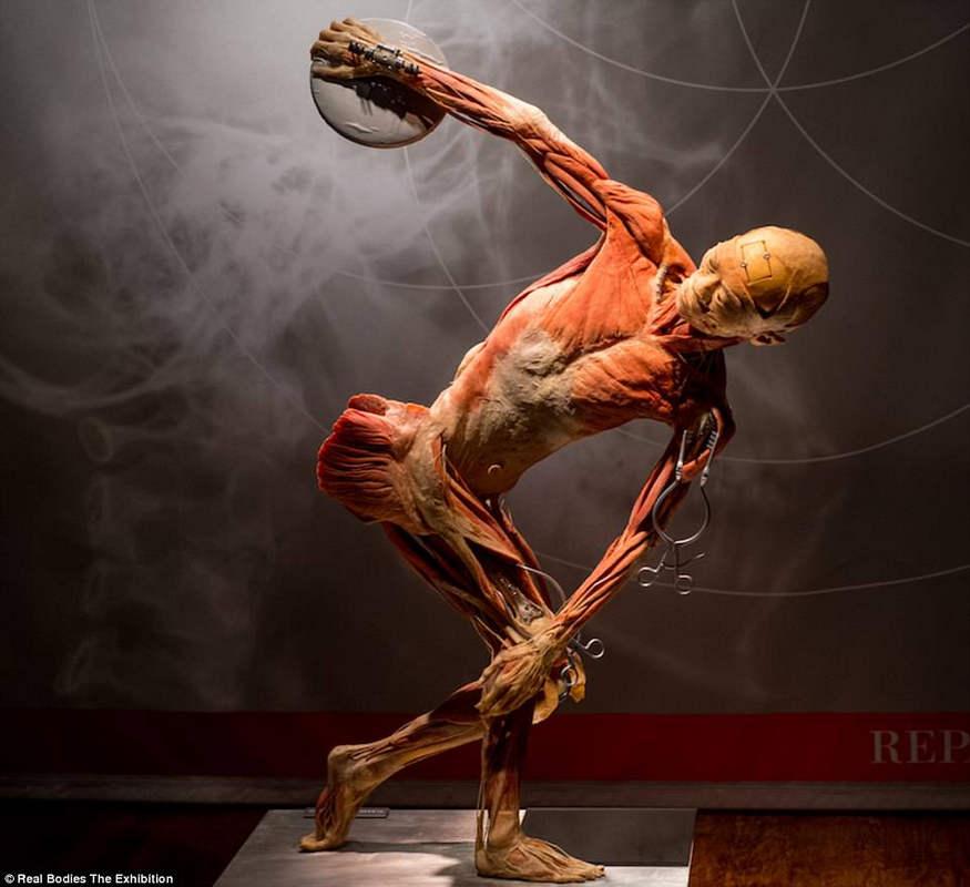 Выставка настоящих анатомированных тел «Реальные тела»