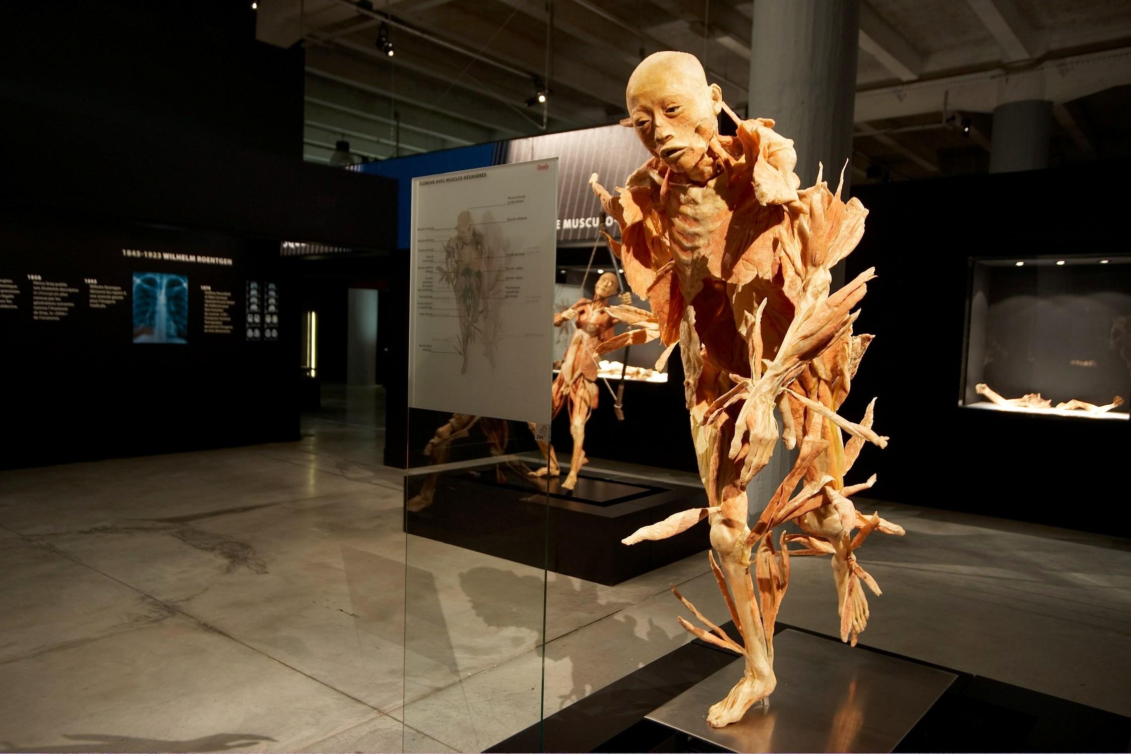 Фото с выставки «Реальные тела»