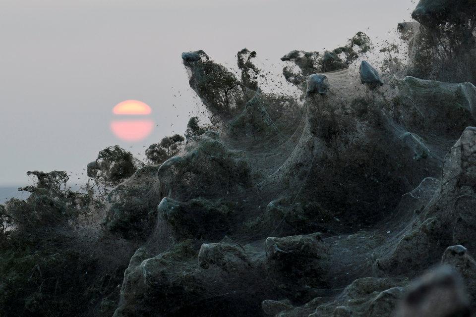 Похоже на грохочущие волны или на дементоров из «Гарри Поттера». Но на самом деле это кусты, покрытые паутиной, на берегу греческого озера Вистонис.