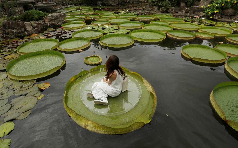 Девушка на гигантском листе водяной лилии в Тайбэе, Тайвань.