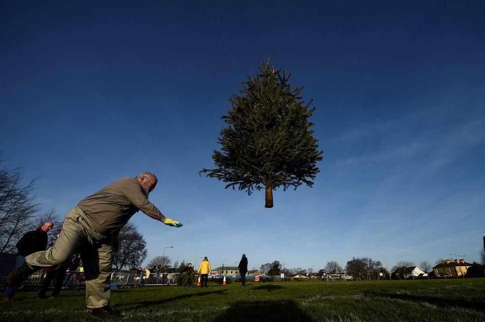 Парящее дерево на конкурсе по метанию ёлки в Эннисе, Ирландия.