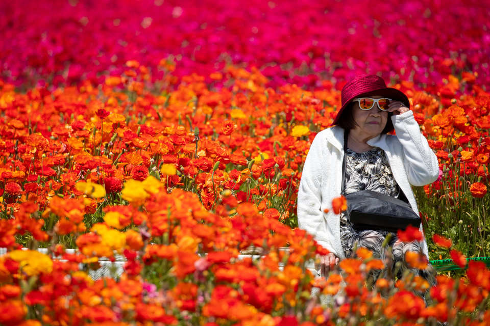 Женщина в цветочных полях в Карлсбаде, Калифорния.