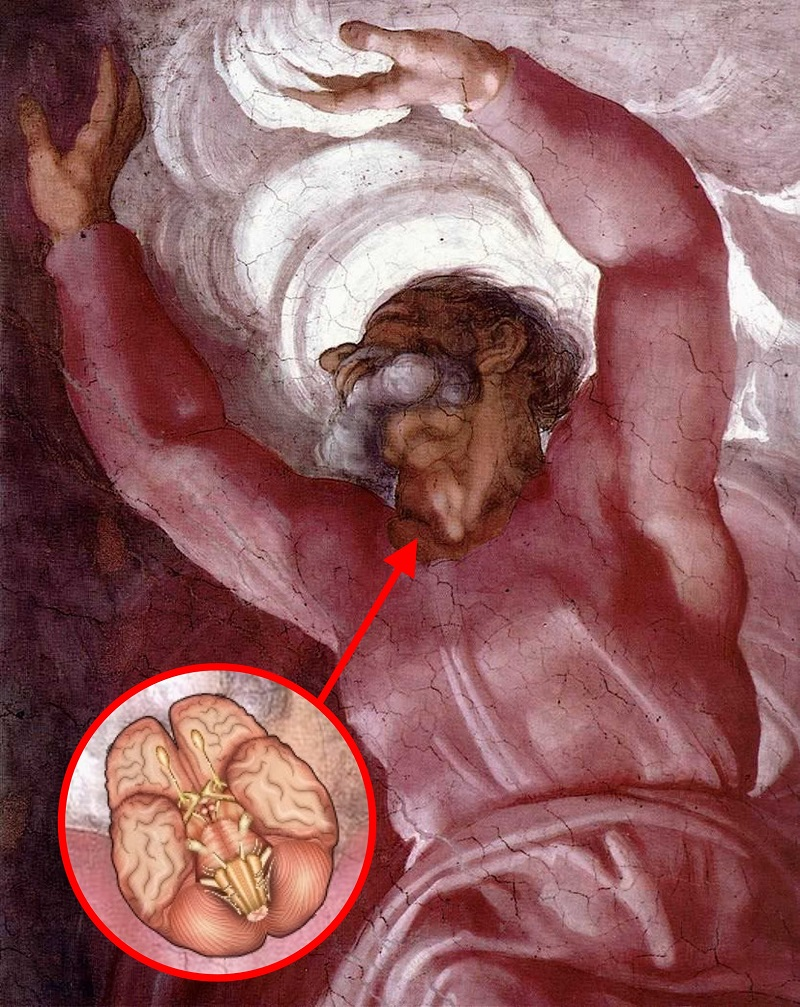 Анатомический код Микеланджело