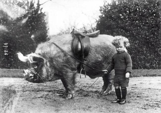 Мальчик и его кабан (1912)