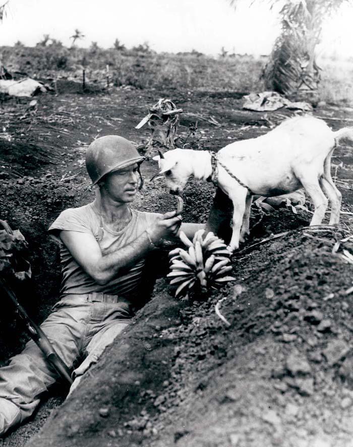 Солдат делится бананом с козочкой во время войны на Сайпане, ок. 1944 года.