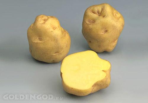 французский картофель La Bonnotte