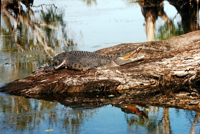 Национальный парк Какаду отличается от себе подобных