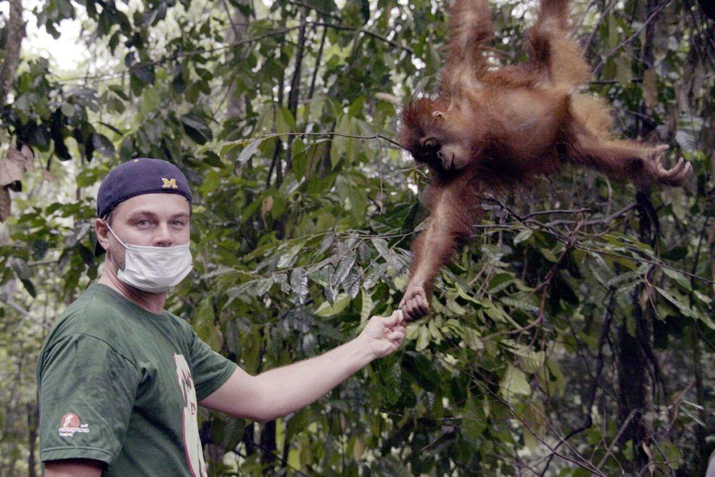 Леонардо Ди Каприо в Индонезии в национальном парке на севере острове Суматра – Гунунг-Лесер