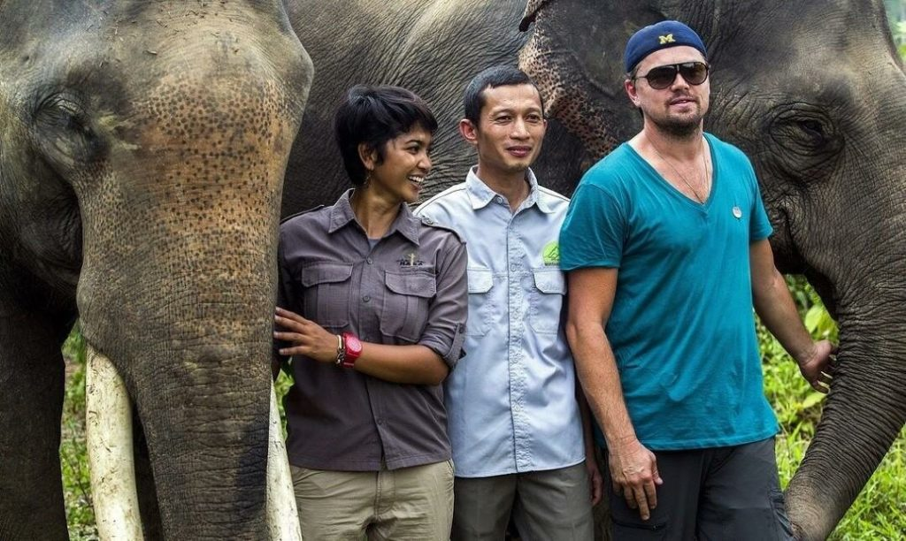 Леонардо Ди Каприо в Индонезии в национальном парке на севере острове Суматра – Гунунг-Лесер (суматранские слоны)