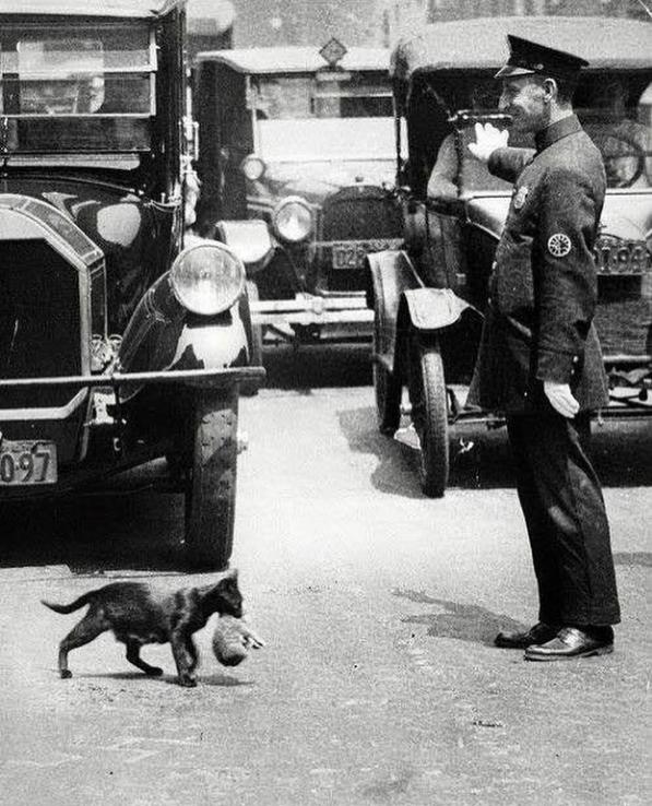 Полицейский останавливает движение, чтобы пропустить кота. Нью-Йорк, 1925 год