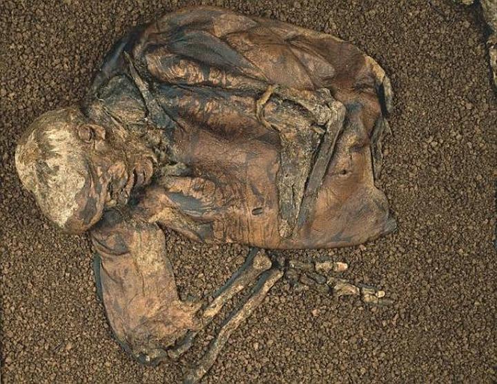 Болото человеческих органов