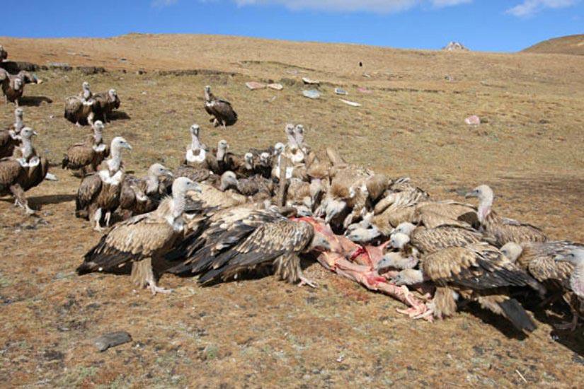 Похороны Тибет
