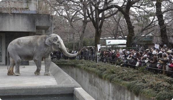 токийский зоопарк