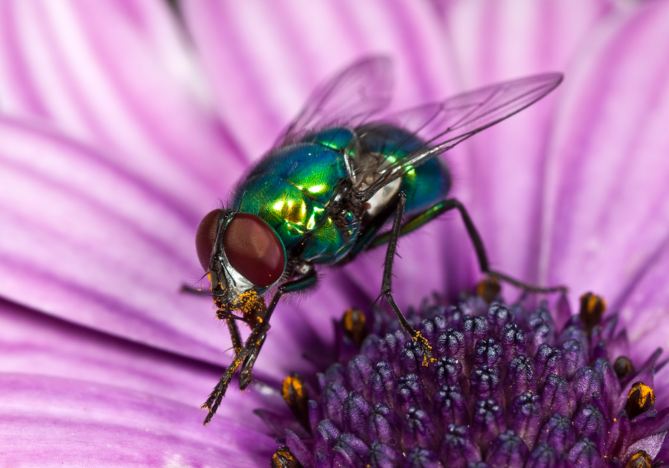 Правда о том, зачем мухам нужно тереть лапками