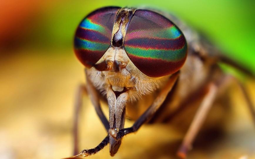 Стало ясно зачем мухам трение лапками