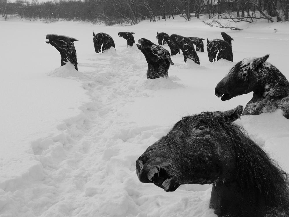 Замёрзшие лошади в зимнем озере, Канада, 1926 г.