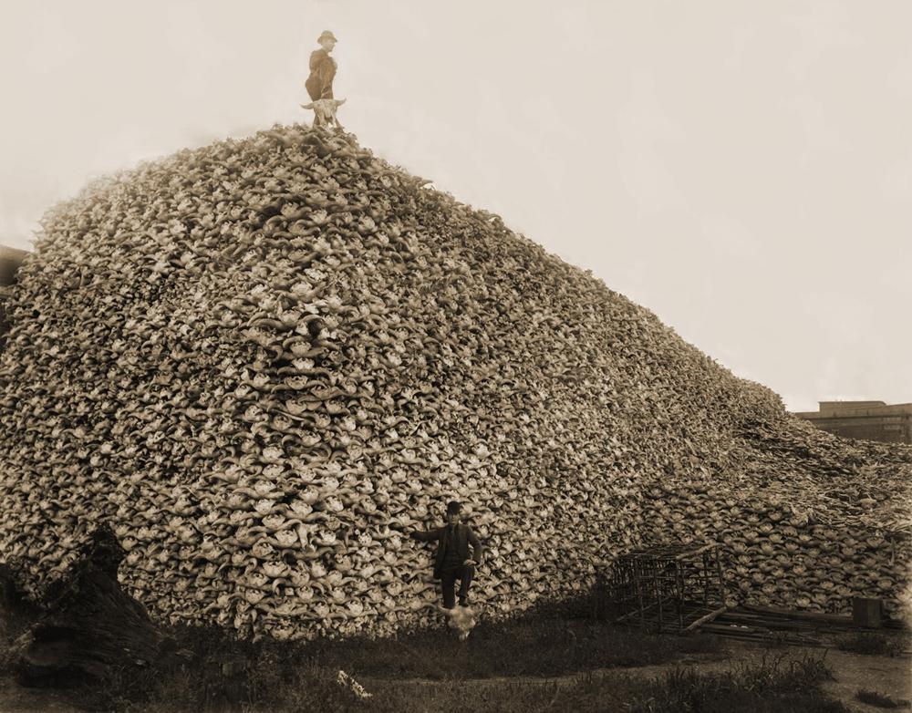 Куча бизоньих черепов, ожидающих переработки на удобрения. США, 1870 г.